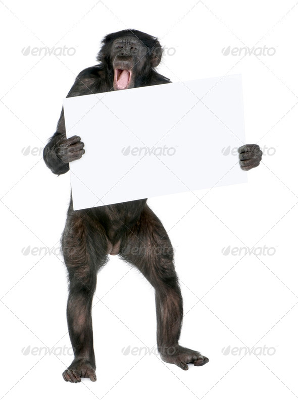 protesting monkey - Stock Photo - Images