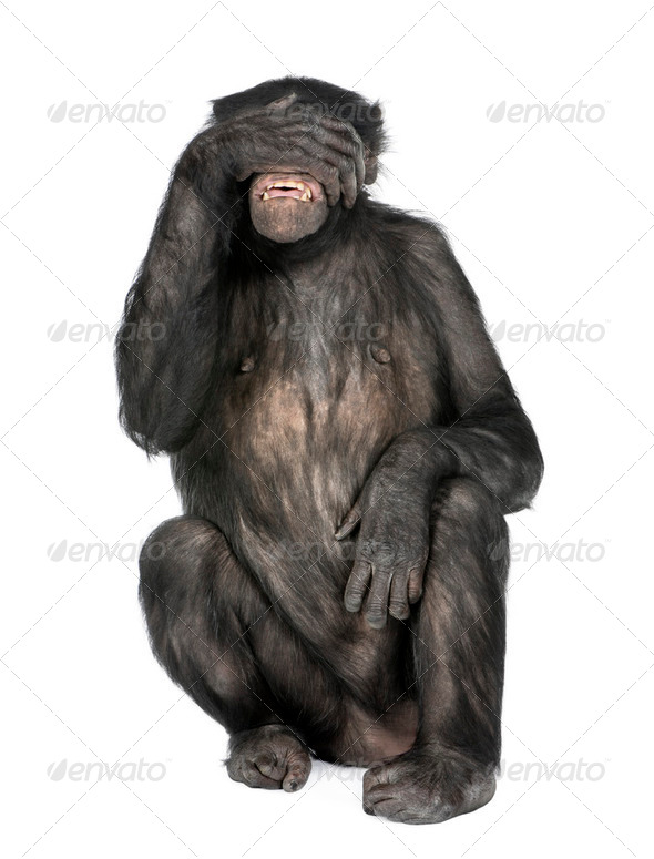 see no evil monkey - Stock Photo - Images