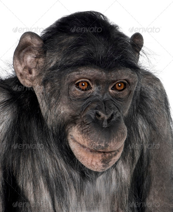 close-up on a monkey's head - Stock Photo - Images