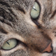 Tired Cat - VideoHive Item for Sale