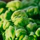 Fresh green basil in sunset sunbeam - PhotoDune Item for Sale