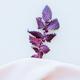 Violet leaf on silk fabric - PhotoDune Item for Sale