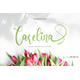 Carelina