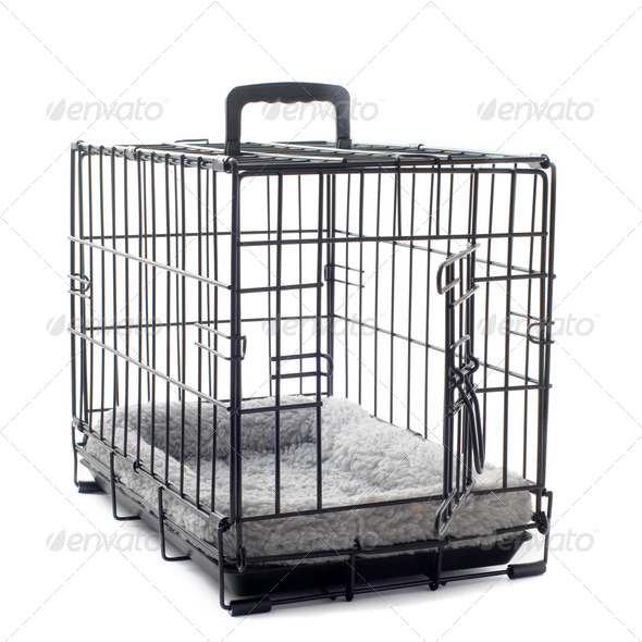 pet carrier with cushion - Stock Photo - Images