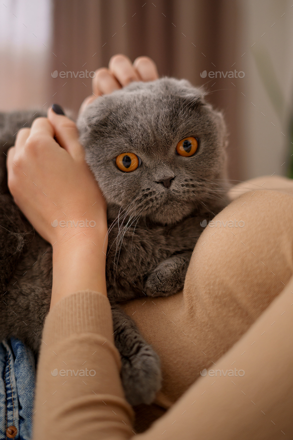 Young woman and cat on bed in the room - Stock Photo - Images