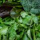 fresh organic vegetables. Healthy food. Vegetable - PhotoDune Item for Sale