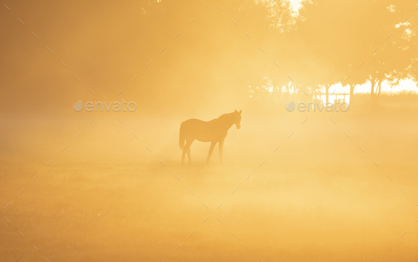 horse in dense fog and sunlight - Stock Photo - Images