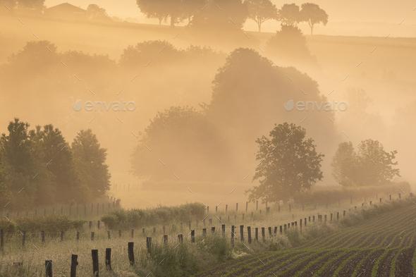 beautiful misty sunrise on belgian farmland - Stock Photo - Images