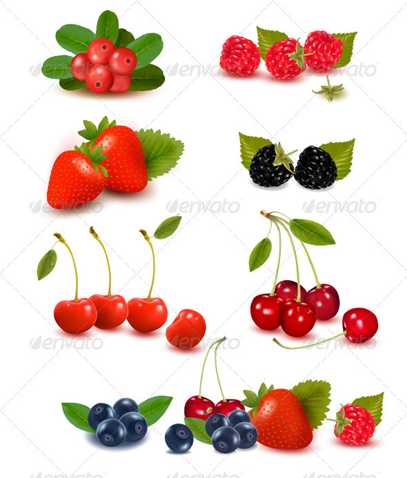 Big group of fresh berries  Vector illustration  - Food Objects