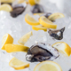 Oysters on ice with lemon - PhotoDune Item for Sale