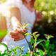 The farmer picking Green tea bud and fresh leaves with soft light, Tea plantation - PhotoDune Item for Sale