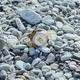 crumpled aluminum metal orange can on pebble beach - PhotoDune Item for Sale