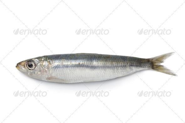 Whole single fresh sardine - Stock Photo - Images
