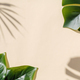 Trending image of monstera leaf and blurred shadow of palm tree on pastel background and copy space. - PhotoDune Item for Sale