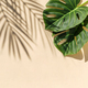 Contemporary image of monstera and palm shadows on a beige background and copy space. - PhotoDune Item for Sale