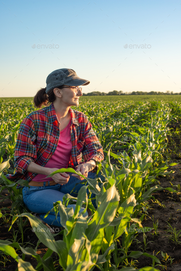 Middle age female caucasian maize farmer kneeled for inspection corn at field - Stock Photo - Images