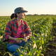 Middle age female caucasian maize farmer kneeled for inspection corn at field - PhotoDune Item for Sale