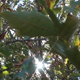 Under a Plane Tree - VideoHive Item for Sale