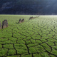 Tapestry of green grass on the cracked mud of the dry bottom of the reservoir - PhotoDune Item for Sale