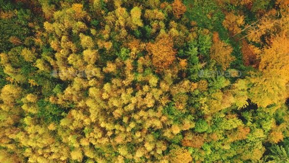 Top down aerial sun mountain forest. Nobody nature landscape at autumn sunny day. Green, yellow tree - Stock Photo - Images