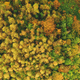 Top down aerial sun mountain forest. Nobody nature landscape at autumn sunny day. Green, yellow tree - PhotoDune Item for Sale