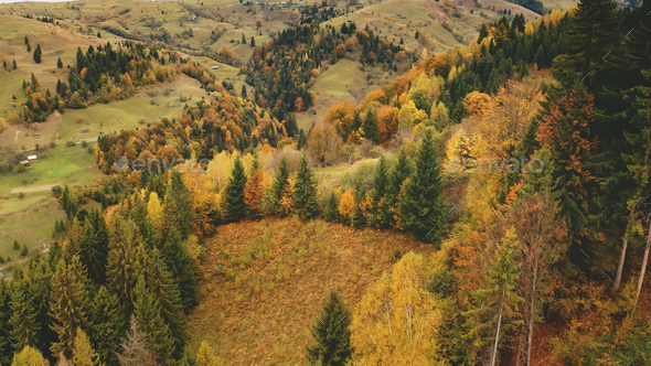 Autumn mountain forest aerial. Sun nobody nature landscape. Rural road at village. Countryside - Stock Photo - Images