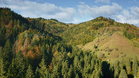 Mountain pine trees forest at ridges. Nobody nature autumn landscape. Green plants, grass at mount - Stock Photo - Images