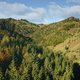 Mountain pine trees forest at ridges. Nobody nature autumn landscape. Green plants, grass at mount - PhotoDune Item for Sale
