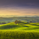 Springtime in Tuscany, rolling hills and trees. Pienza, Italy - PhotoDune Item for Sale