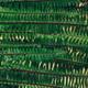 Fern green natural background - PhotoDune Item for Sale