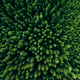 Aerial view of green summer forest with spruce and pine trees. - PhotoDune Item for Sale
