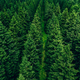 Aerial view of green summer forest with spruces - PhotoDune Item for Sale