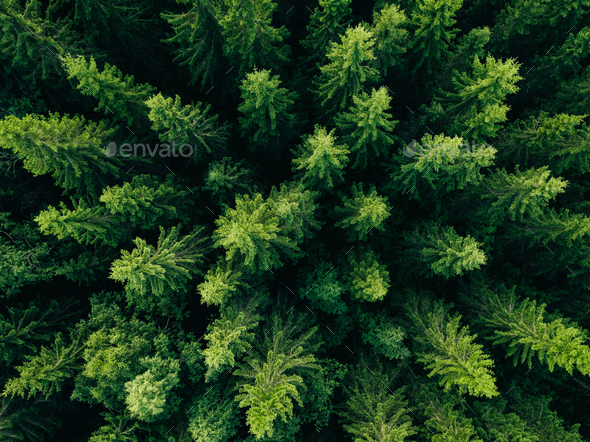 Aerial view of green summer forest with spruce and pine trees. - Stock Photo - Images