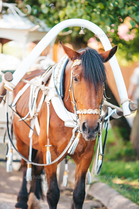 Traditional horse coach Fiaker in Europe - Stock Photo - Images