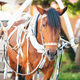 Traditional horse coach Fiaker in Europe - PhotoDune Item for Sale