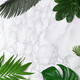 Frame of tropical leaves - PhotoDune Item for Sale
