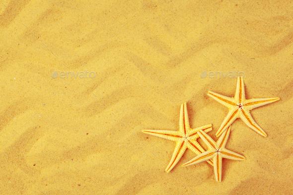Seashells on sand. Sea summer vacation background - Stock Photo - Images