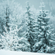 Small fragile tree covered with hoarfrost - PhotoDune Item for Sale