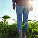 Low angle view at farmer's feet in rubber boots walking along maize stalks - PhotoDune Item for Sale