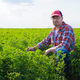 Middle age caucasian farmer inspecting Medicago field summer time - PhotoDune Item for Sale