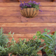 Front view of a group of pots of aromatic herbs. Rustic wooden background with gardening tools - PhotoDune Item for Sale