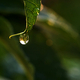 Water drops on the leaf after the rain - PhotoDune Item for Sale