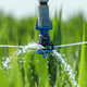 Sorghum crops plantation irrigation - PhotoDune Item for Sale