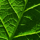 Background of the green leaf - PhotoDune Item for Sale