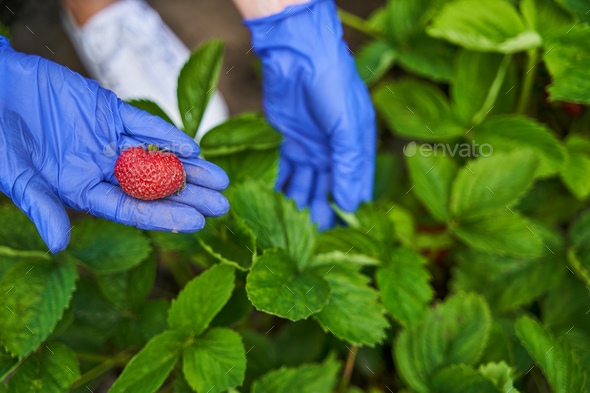 Female hand holding ripe and juicy berries - Stock Photo - Images