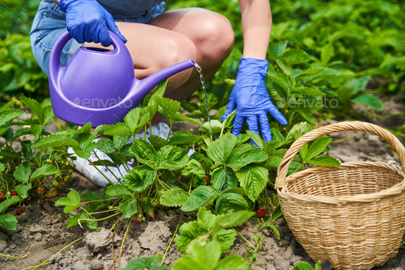 Female person taking care of plants with water - Stock Photo - Images