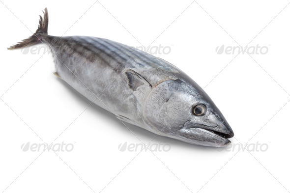 Whole fresh Little tunny fish - Stock Photo - Images