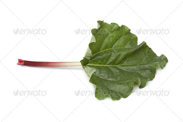 Fresh Rhubarb stalk and leaf - Stock Photo - Images