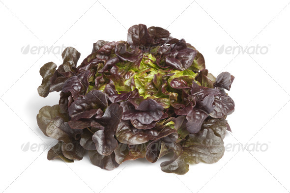 Fresh Oak leaf lettuce - Stock Photo - Images