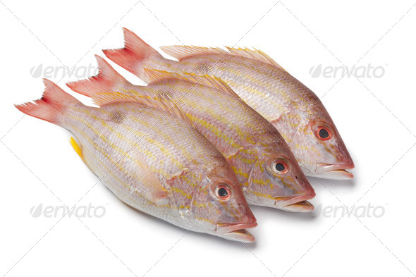 Fresh Lane snappers - Stock Photo - Images